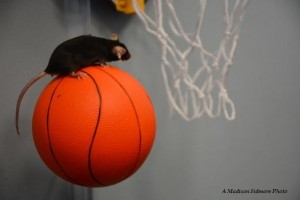Hoop_dreams_blog_image